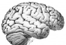 brain, photo: commons.wikimedia.org, Popular Science Monthly Volume 46