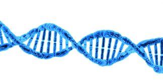 DNA, pixabay