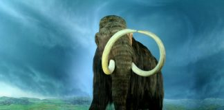 Wooly Mammoth Photo: Wikimedia, Flying Puffin
