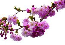 spring flowers, commons.wikimedia.org, Karen Arnold