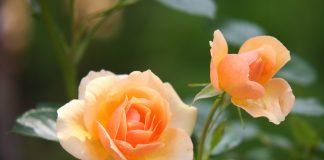 flowers by pixabay on pixabay