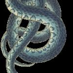snake by susannp4 on pixabay