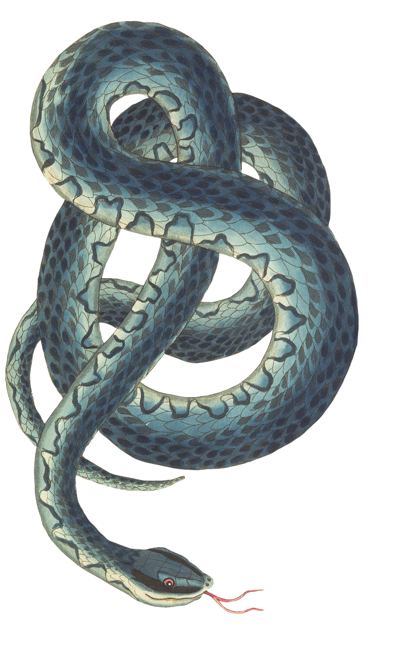 snake by susannp4 on pixabay