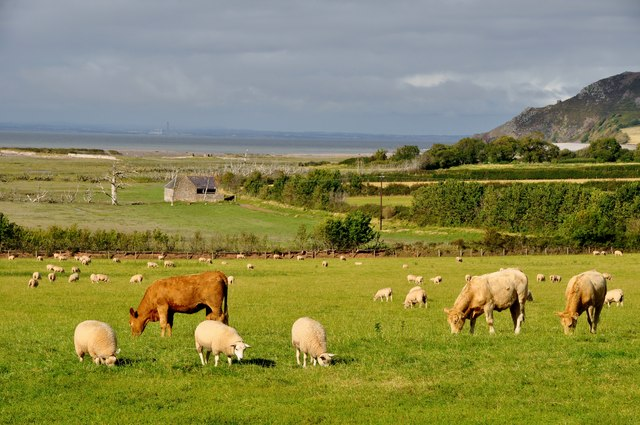 West Somerset : Field of Sheep & Cows. Photo: Lewis Clarke, geograph.org.uk