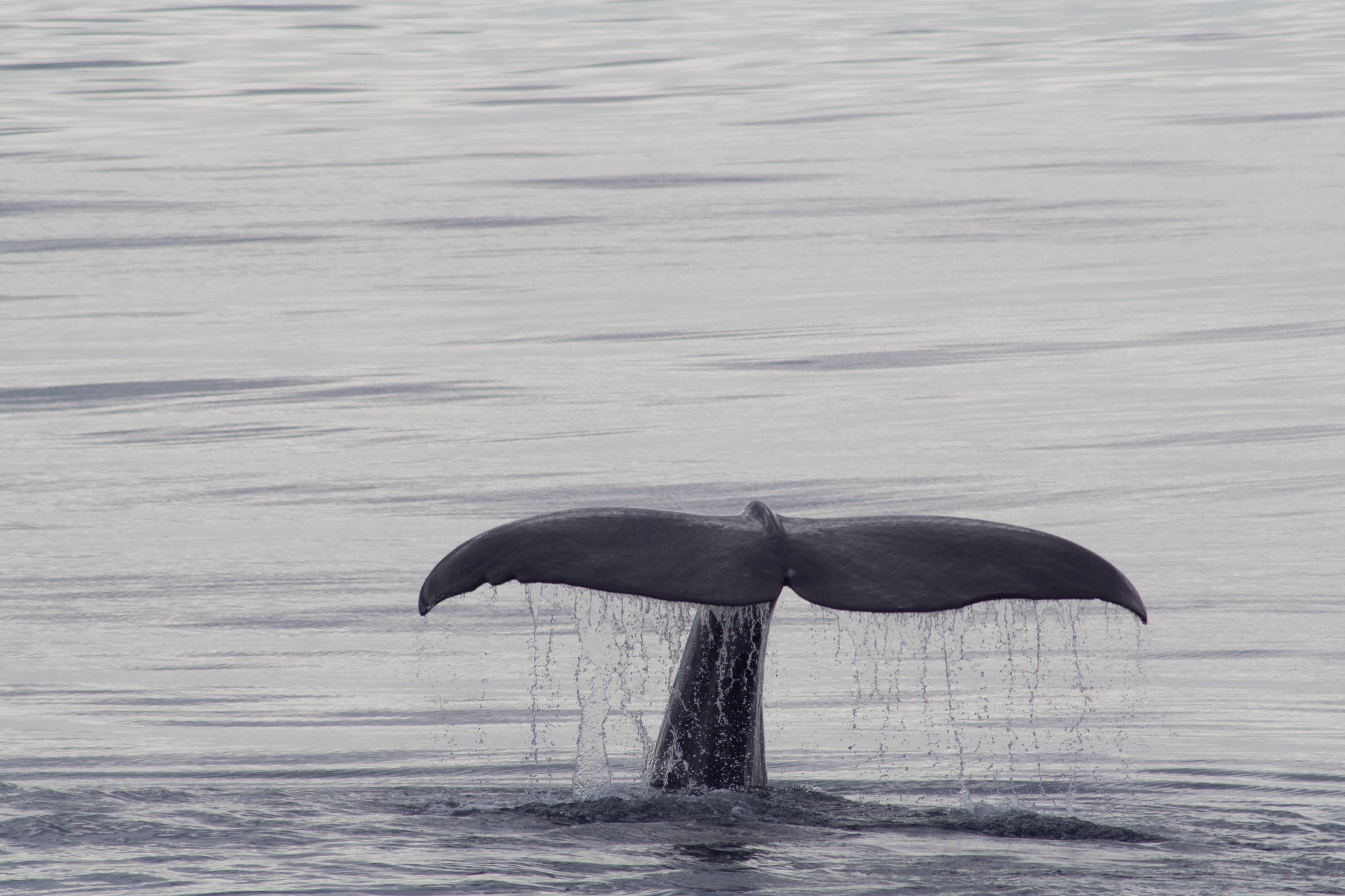 killer whale flickr Harald MM