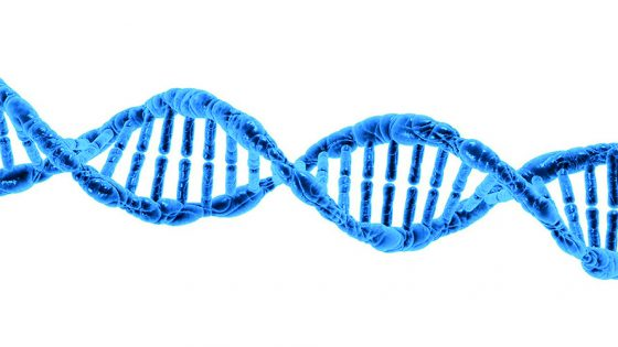 Meddling with DNA can make a positive impact