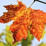 Autumn-2013