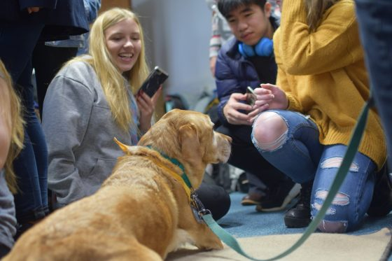Students given paws from deadlines