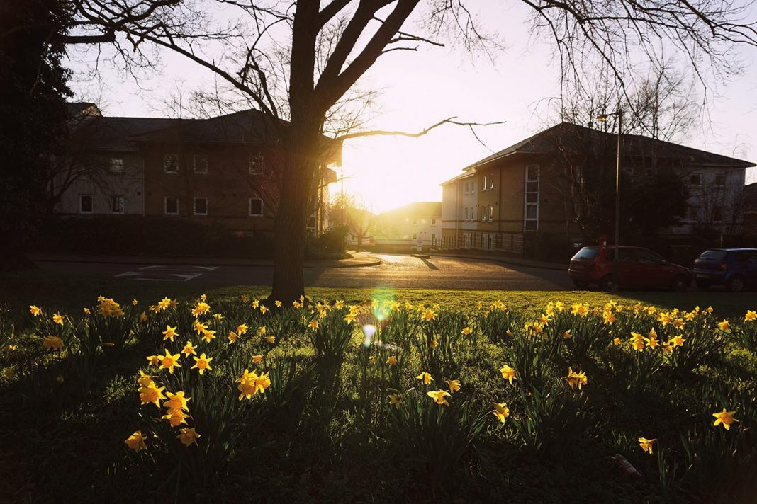 UEA Village in the spring. Photo: Daniel Salliss.