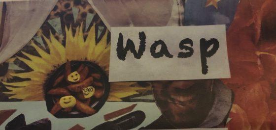 Wasp, Maddermarket Theatre