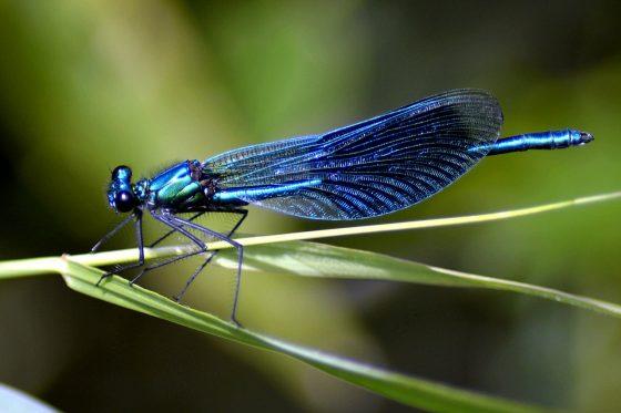 Grey skies and blue dragonflies