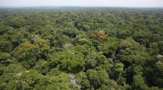 Concerns over plans to drain Congo peat bog