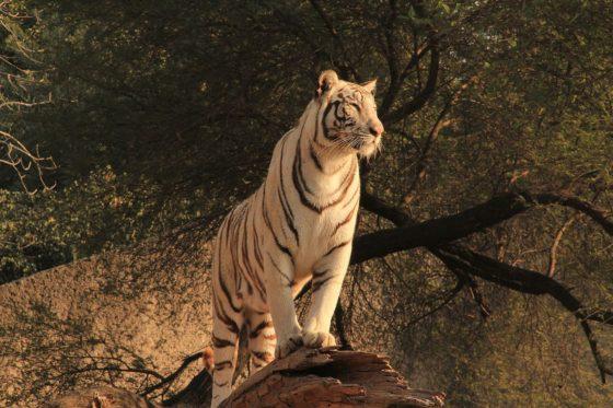 Tiger King 'antidote to quarantine boredom'